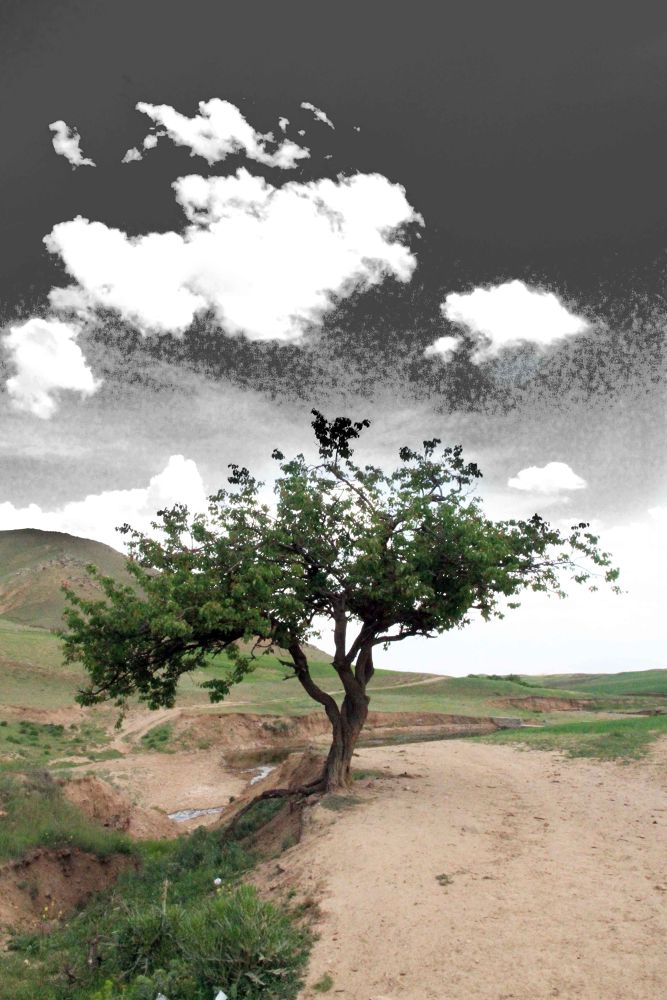 IMG_9484b by siroushessari
