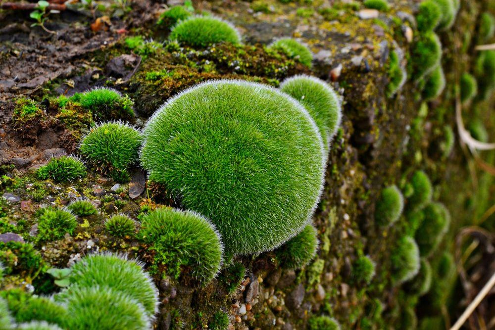Moss by sokoke