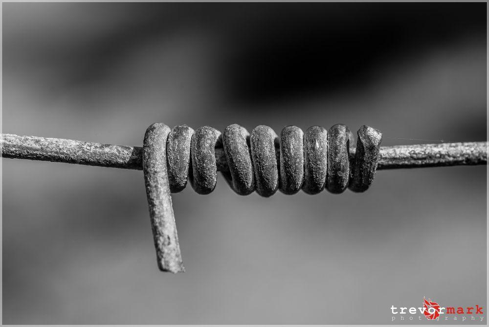 DSC_1521 by tmphoto