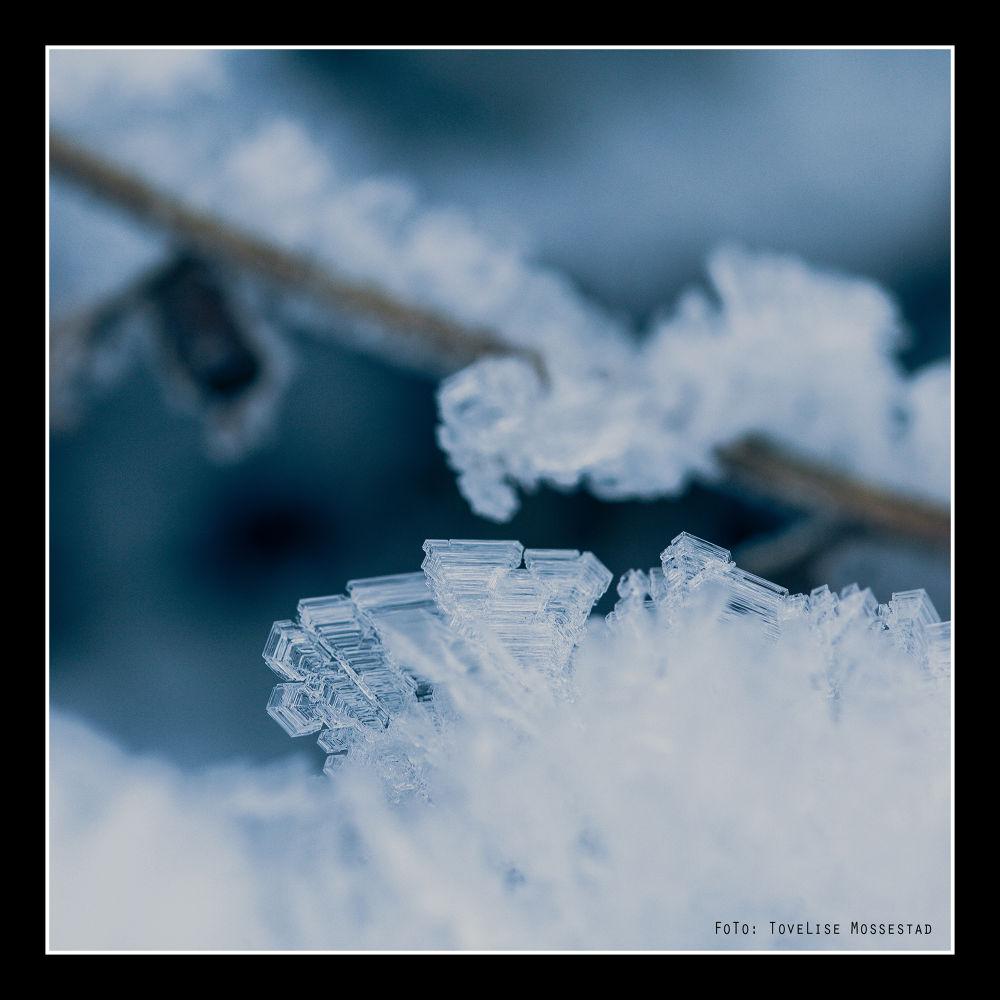 Frost by tovelisemossestad