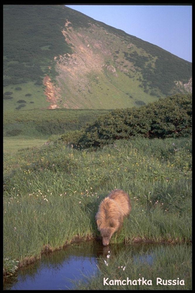 BEAR COUNTRY 14 by bearhelp