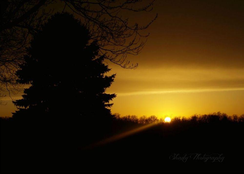 IMG_9769 by Shady Photography Studio, LLC