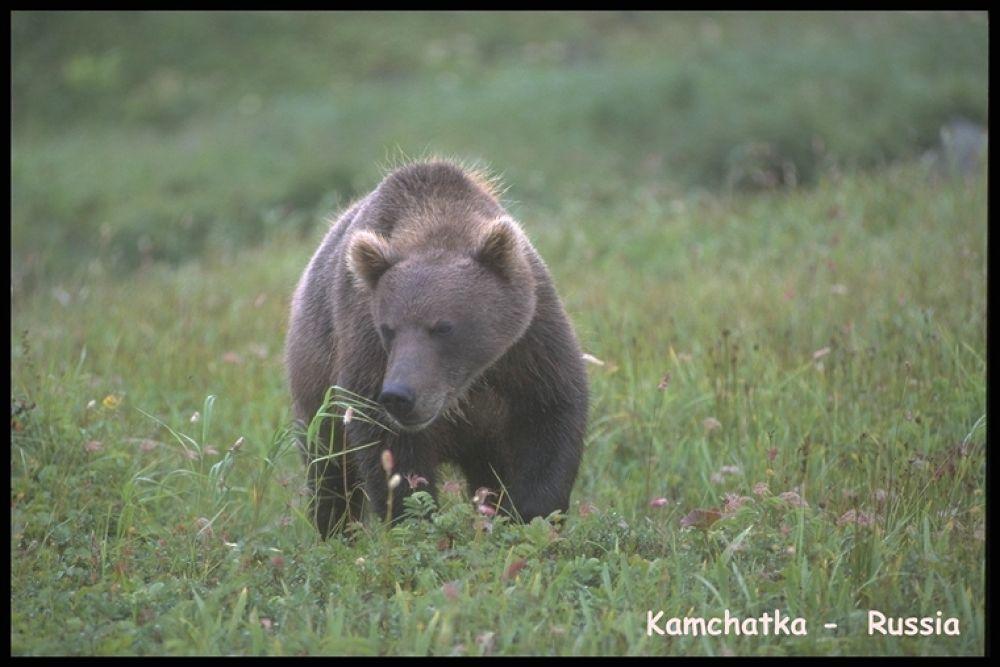 BEAR COUNTRY 17 by bearhelp