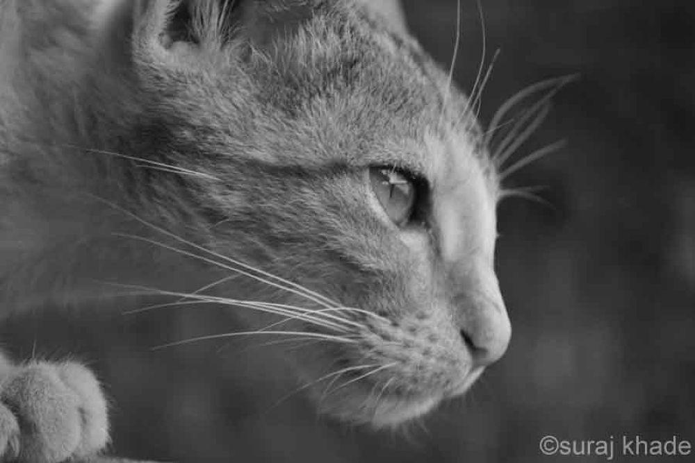 small cat by khadesuraj
