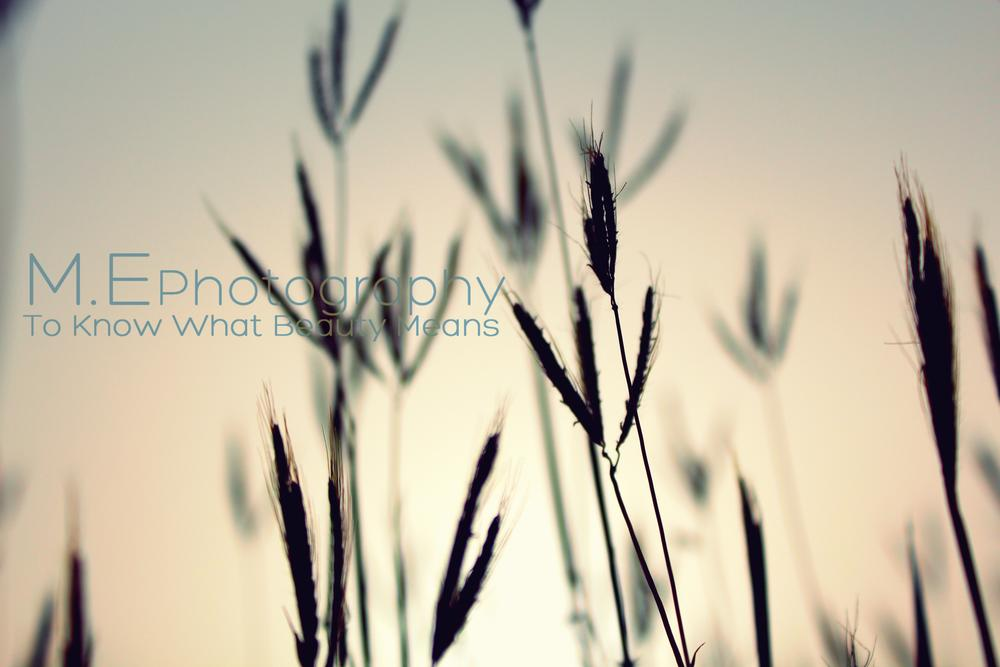 Grass by Mohab Emad
