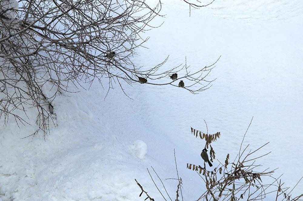 Birds Enjoying Snow. by Majid Tarighati