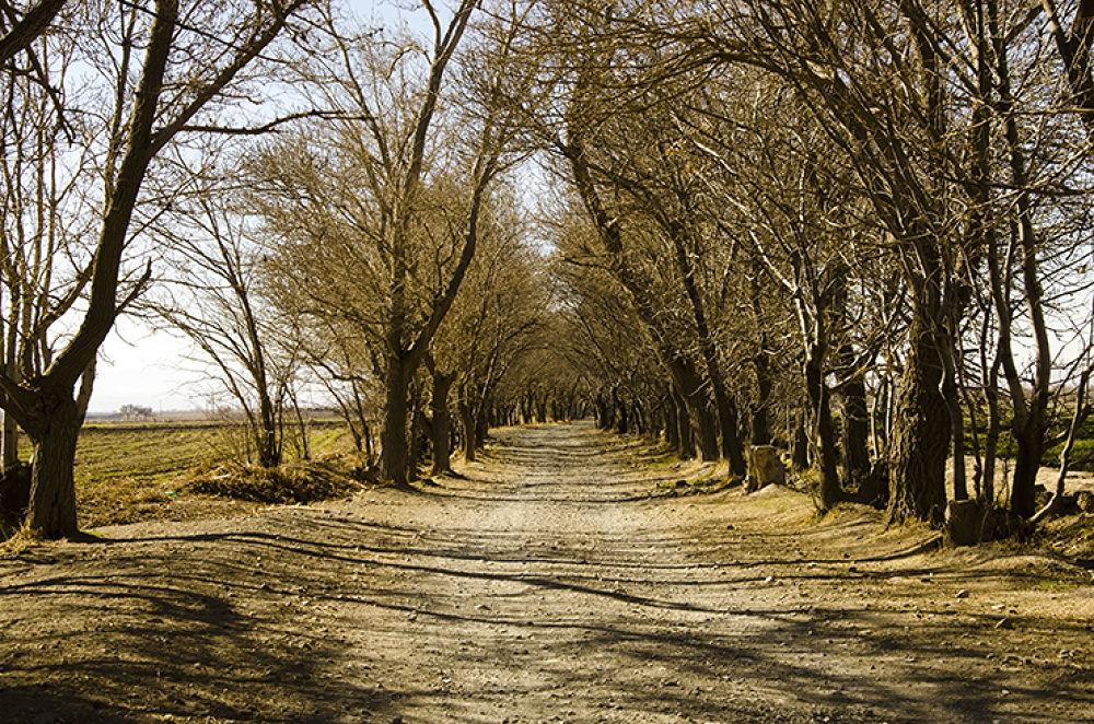 Trees. by Majid Tarighati