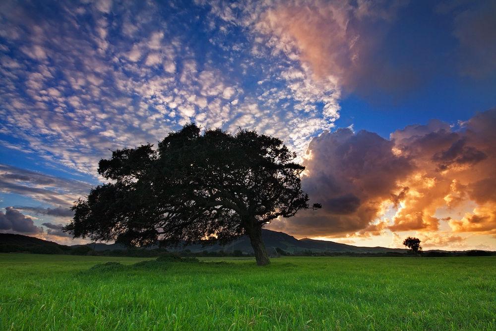 La-corte-albero-1200px.jpg-2 by toreserra
