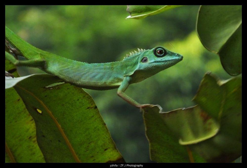 Green by yzhifa