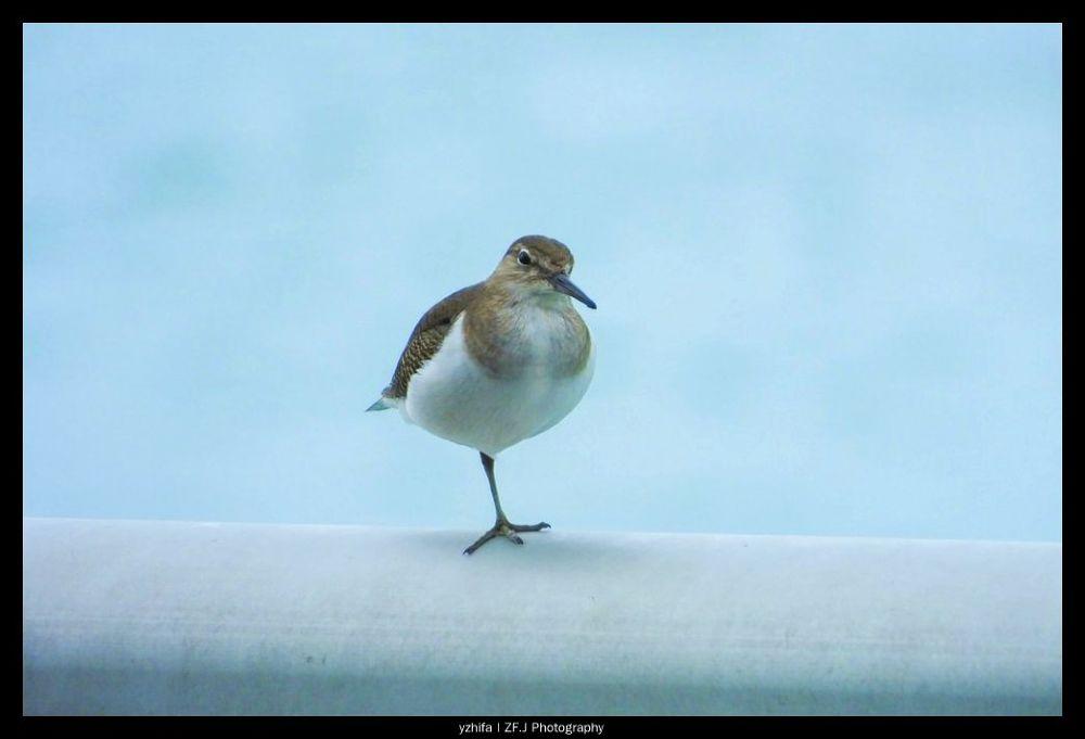 Photo in Random #birds #zfjphotography #zfaviary #needhelpid