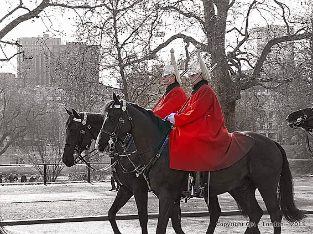 Royal Red by C4OUN