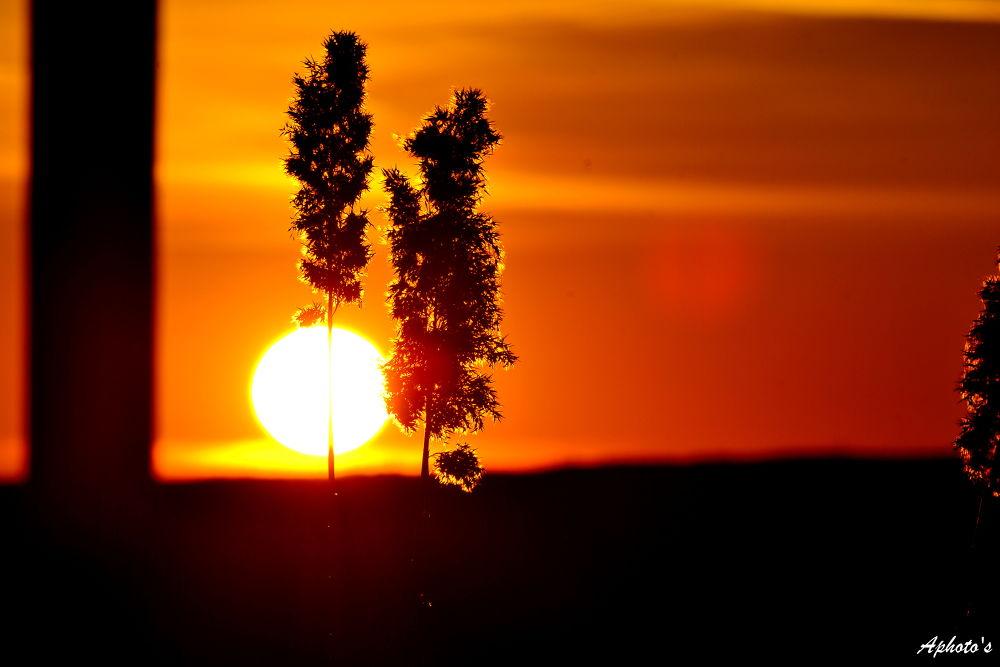 Sus pe soare 8 by Postolea Alexandru