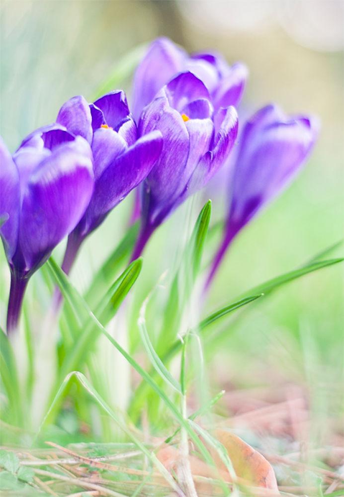 flower by baarisa