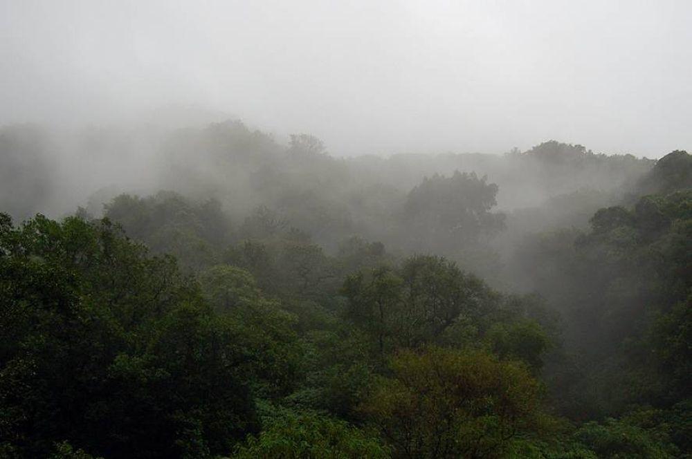 Misty Morning by Sammy Gill