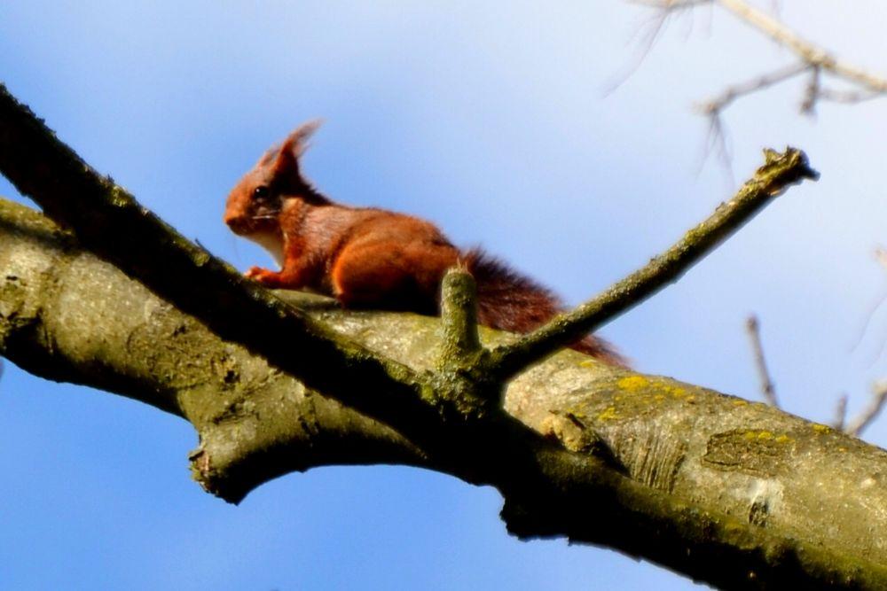 de eekhoorn by ecrava