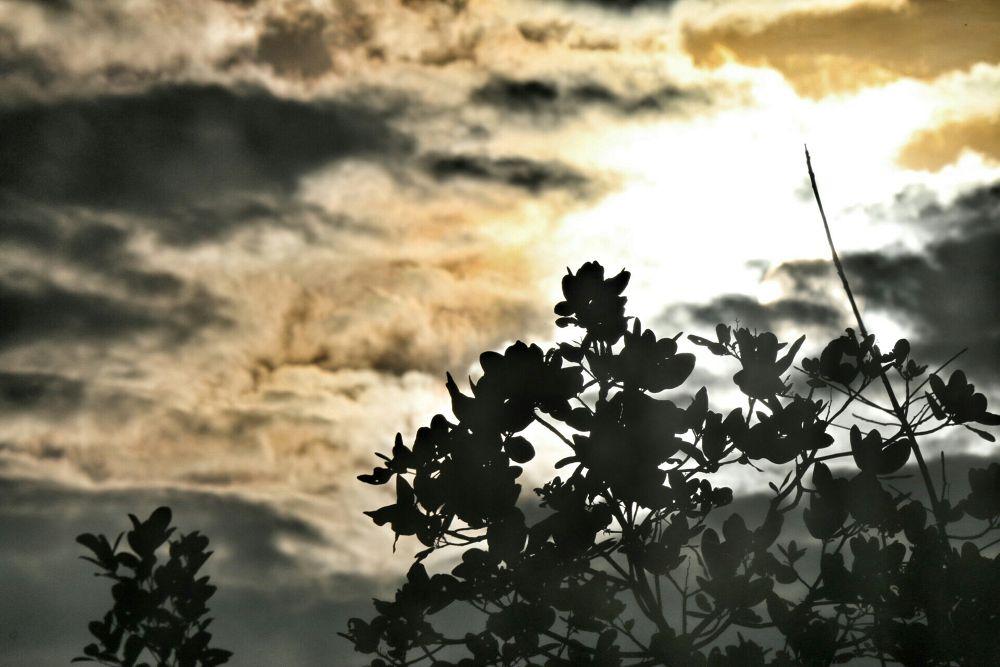 Dawn(non edited) by Sahan Pansilu
