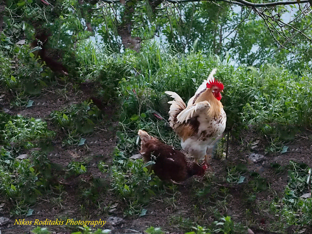"""My cock with its """"girl friend"""" by Nikos Roditakis"""