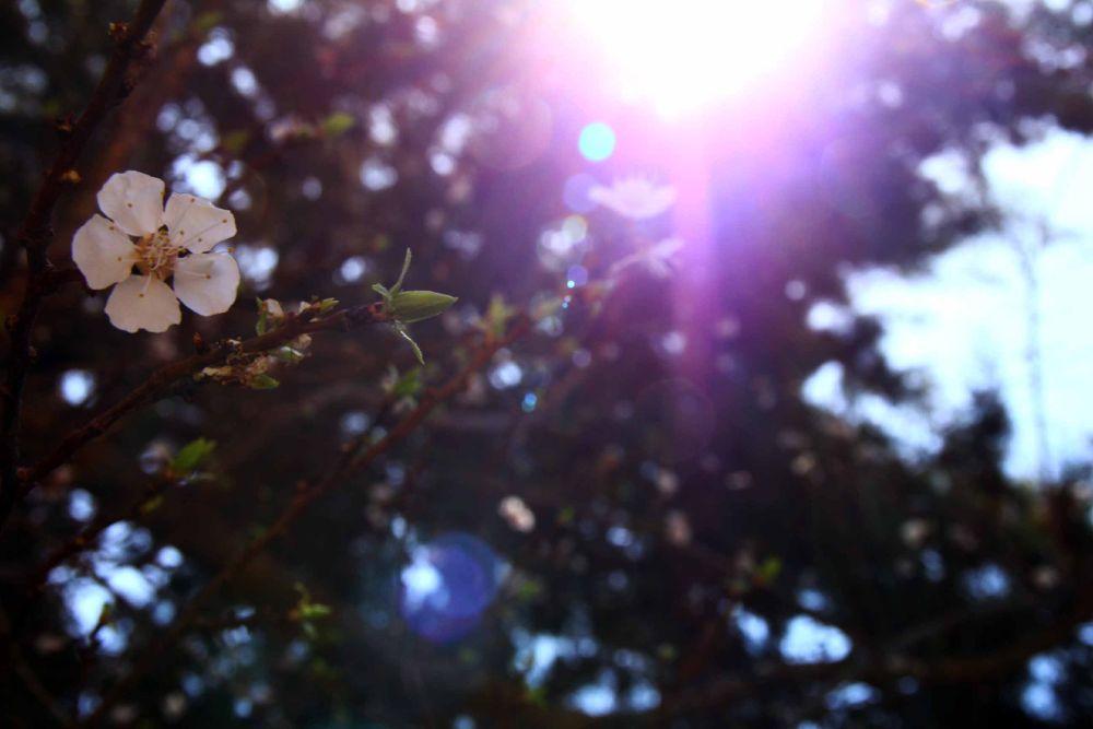 spring. by sHAhRaM.Eslami