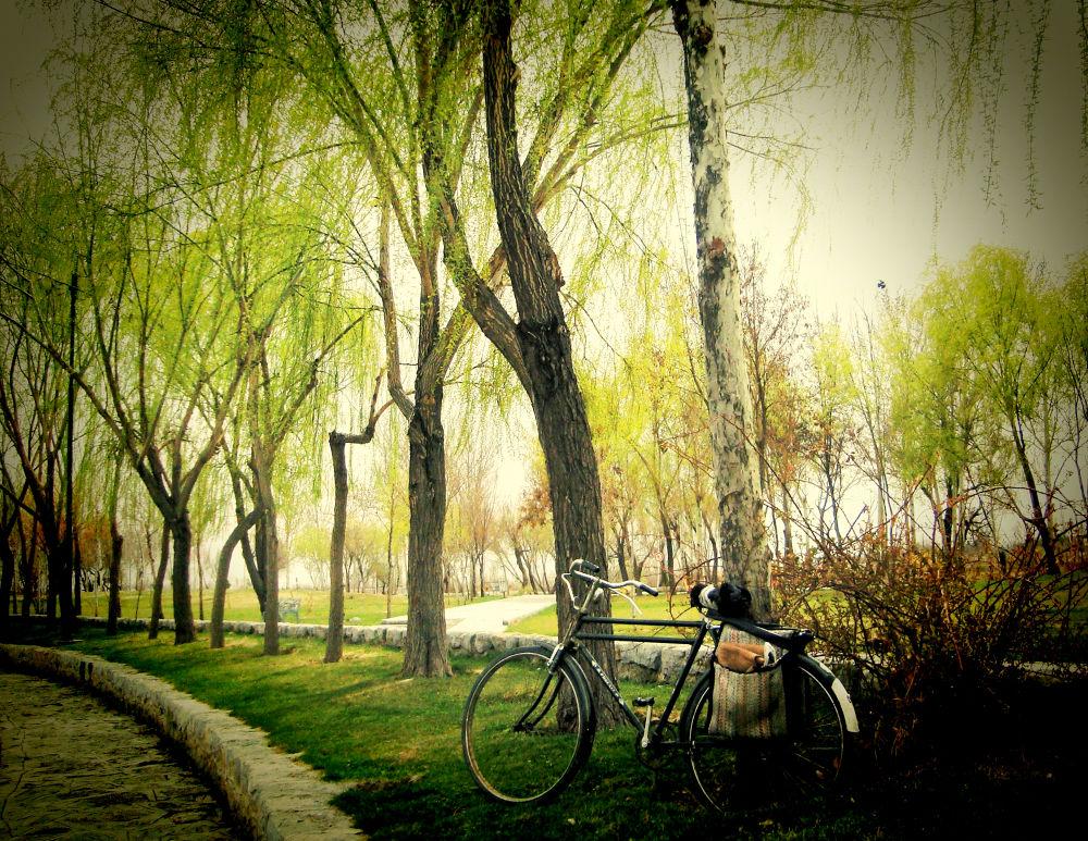 Bikes only . . .  by Mahdi Gh B