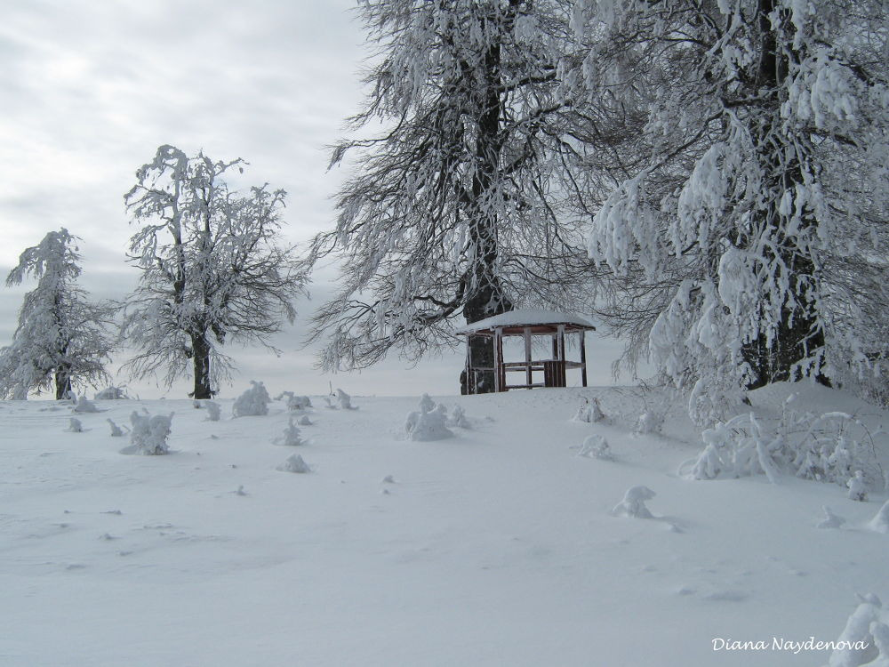 UZANA SNOWY by Diana Naydenova