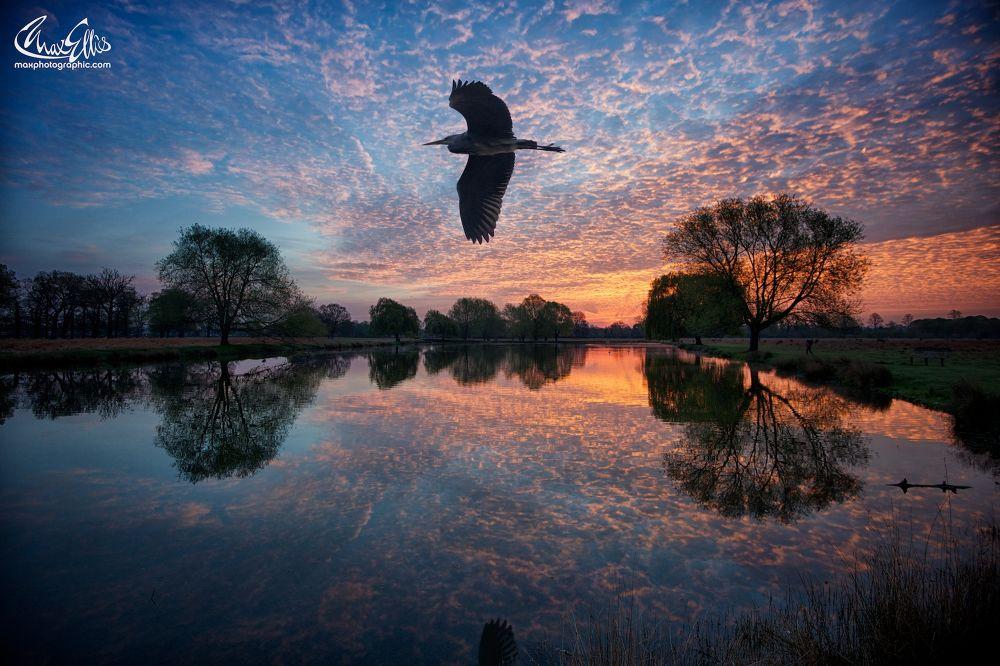 Dawn Flight by Max Ellis