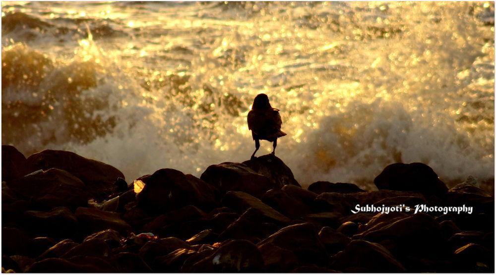 The Crow by Subhojyoti Acharya