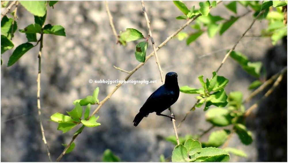 Black Beauty by Subhojyoti Acharya