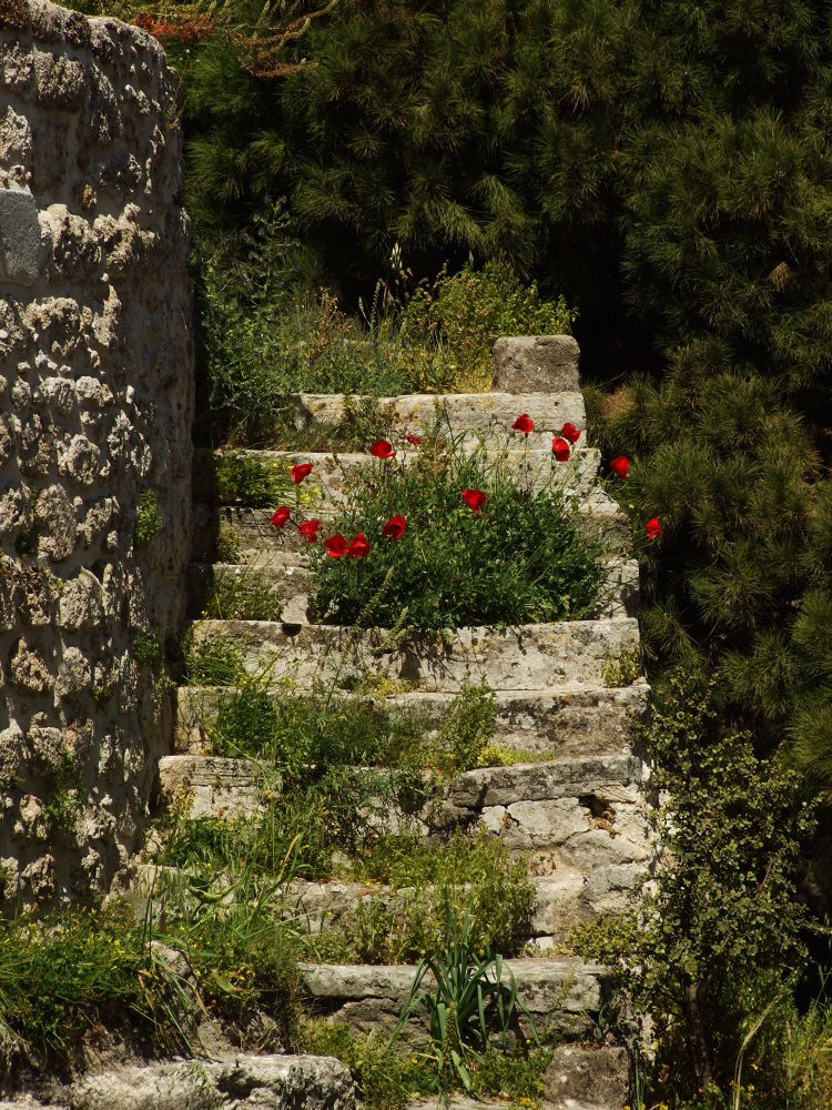 Poppies in the stairs_4 by Michail Vekiaris