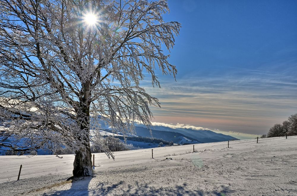 Winter in the Black Forest by midgardson