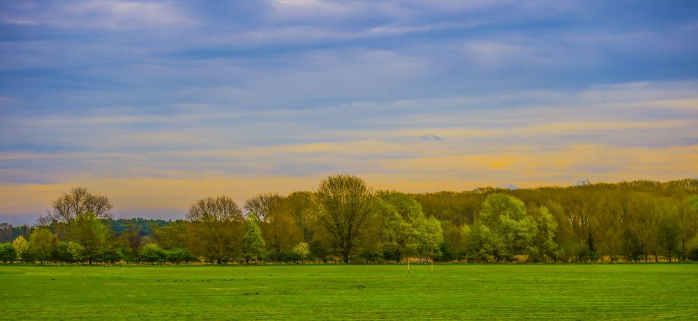 Treeline & Sky by Ron Miller