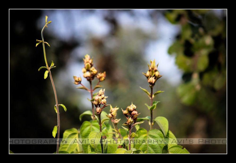 Bud-Dies by Avijit Das