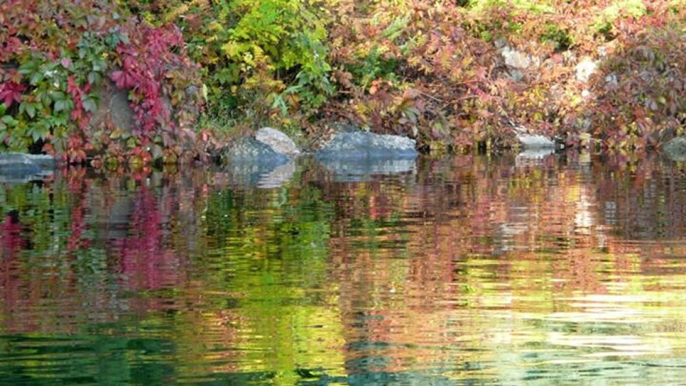 Monet  is   there ---   3 by jean-jacques  ouellet