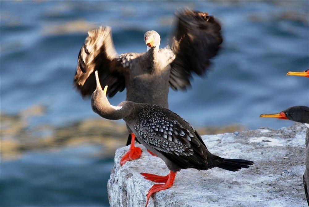 Photo in Random #dance #or #fight