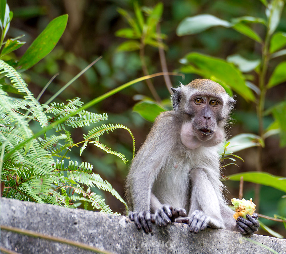 A hungry monkey by nlchoo