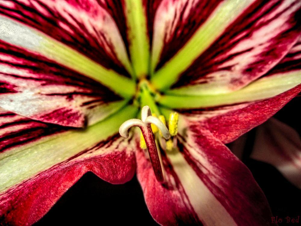 Photo in Macro #fleur #cloche