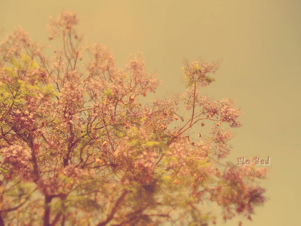 Photo in Nature #vintage