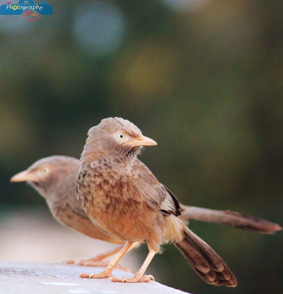 Bird-IMG_0057 by balaananth