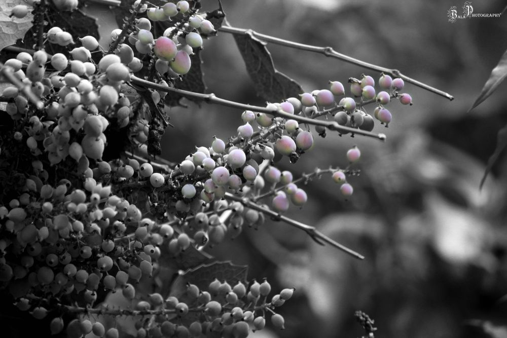 IMG_3932 by balaananth