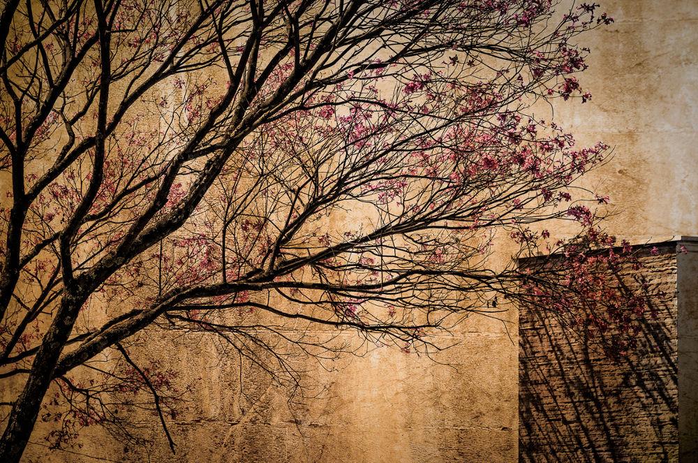 amores by Marco Antonio Sousa