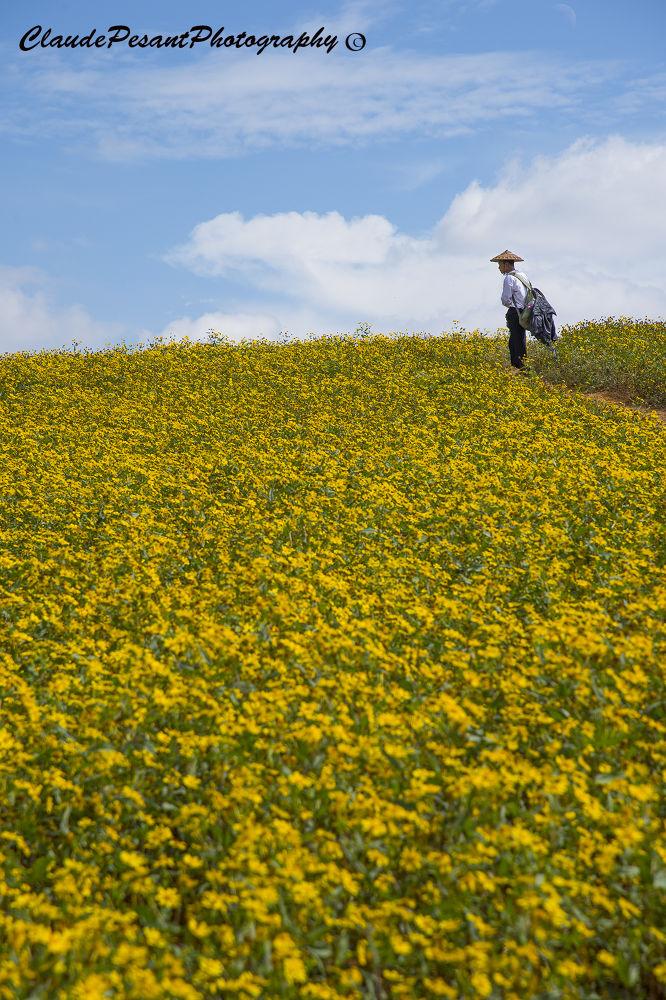 Mustard field by Claude Pesant