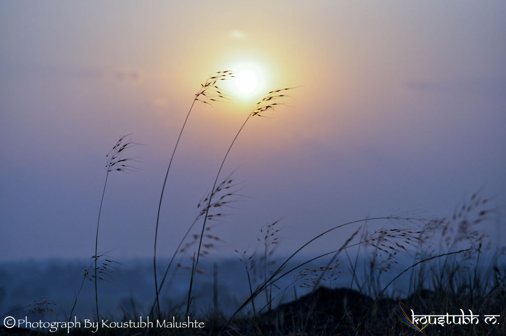 Morning  by Koustubh Malushte