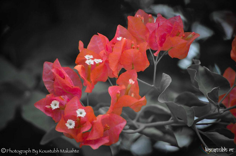 Pink as ... by Koustubh Malushte