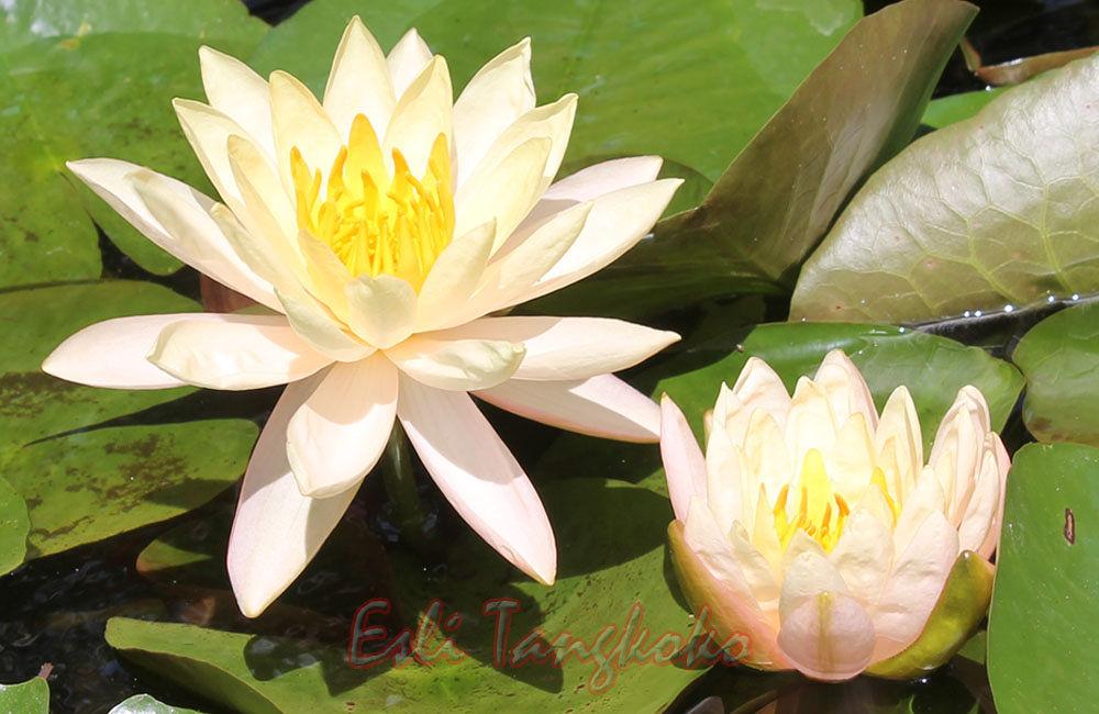 flowers by Esh Lee Tangkoko