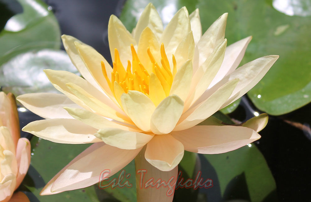 flower by Esh Lee Tangkoko