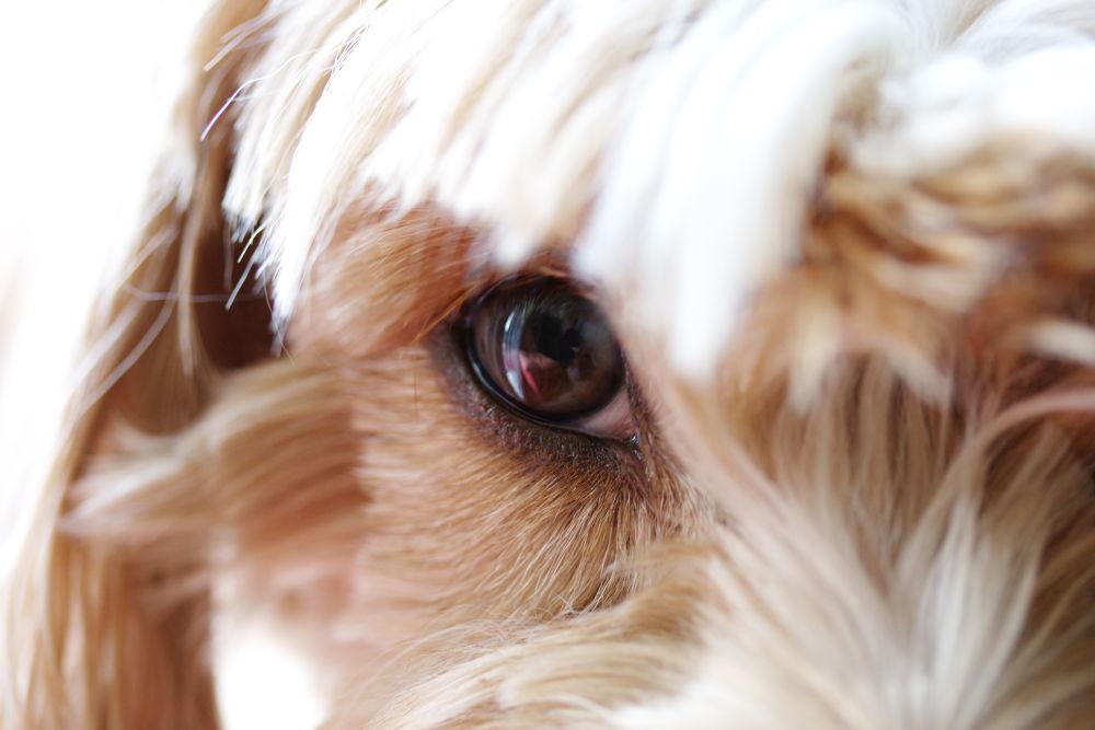 My dog Choupette by Patrice Sarzi