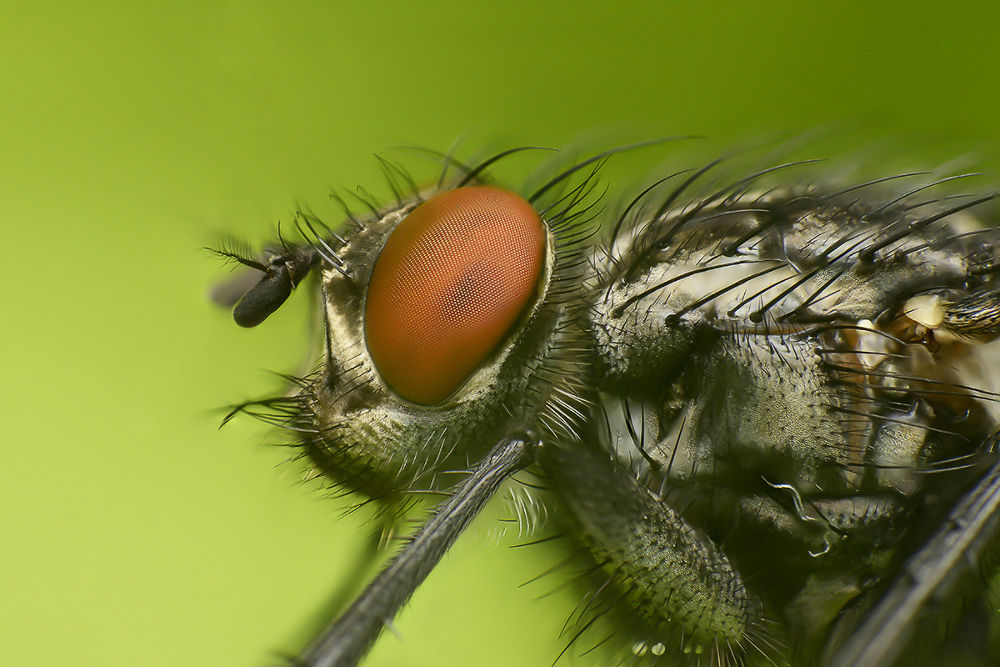 Fly by Photography-Kramer