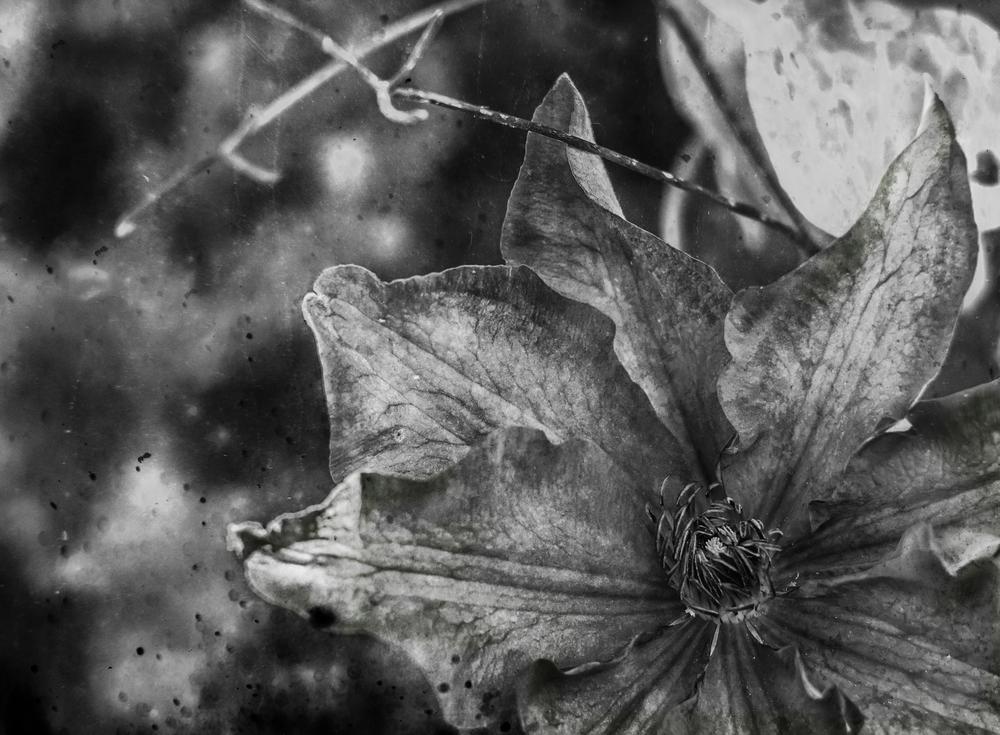 Guardian of the Garden by Zoran Radakovic