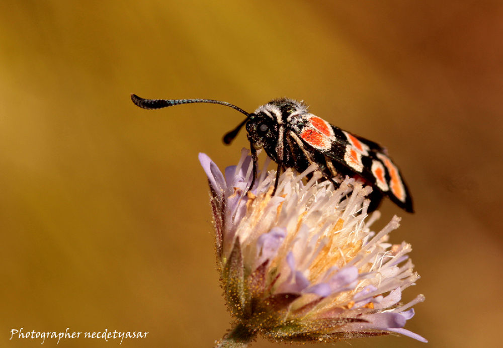 IMG_5116 by necdetyasar
