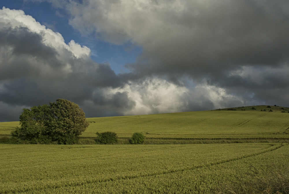 Photo in Landscape #south downs #summer clouds #approching #storm #cloudy sky #green fields