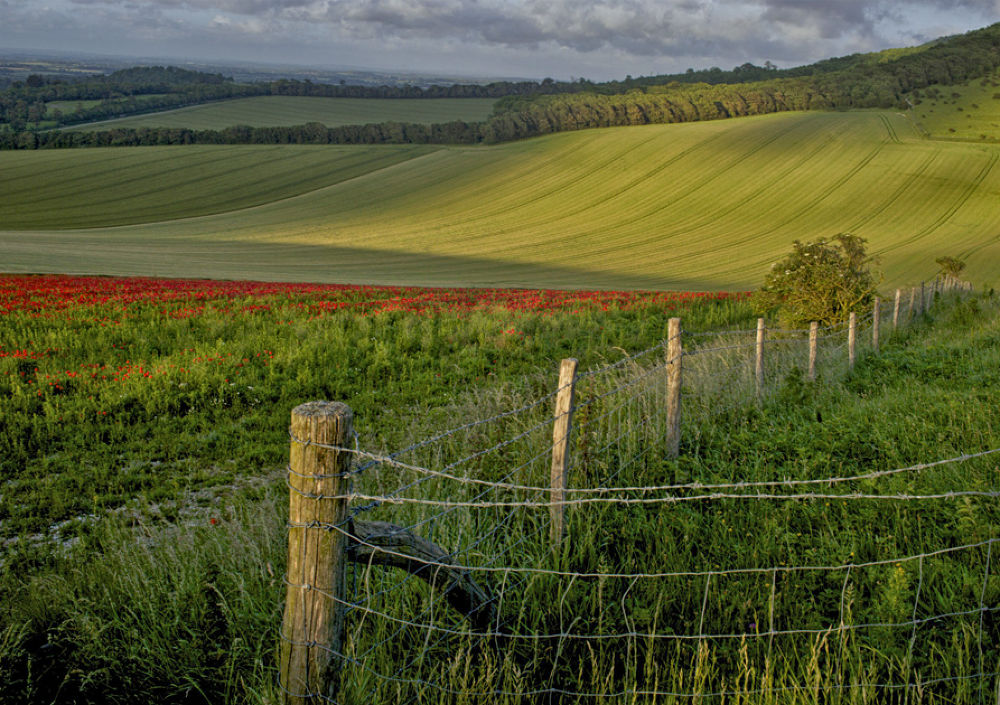 South Downs England by tcbenneyworth